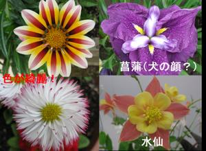 Flower_others