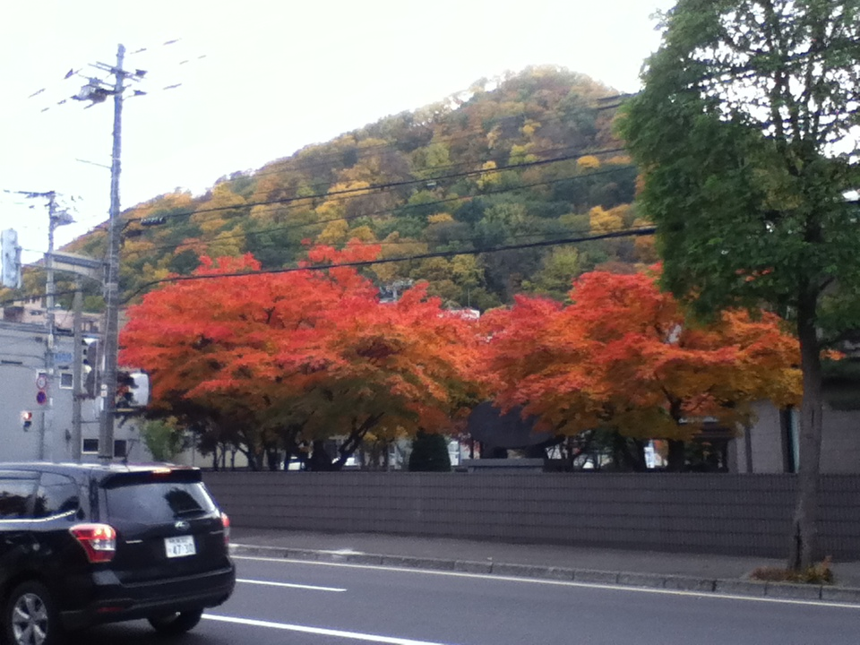 紅葉 Efterårstræer